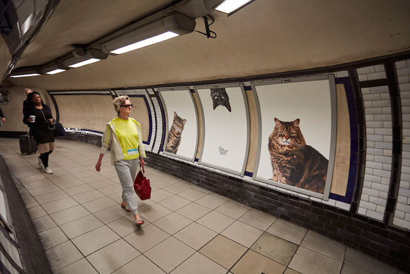 ads replaced with cats in london 4 Citizen Campaign to Replace All Ads with Cats Triumphantly Launches in London