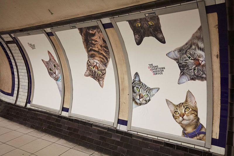 ads replaced with cats in london 7 Citizen Campaign to Replace All Ads with Cats Triumphantly Launches in London