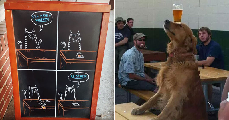 The Shirk Report – Volume388