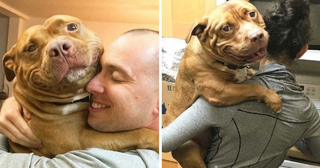 dog cant stop smiling after being adopted meaty the pitbull 9 Dog Cant Stop Smiling After Being Adopted