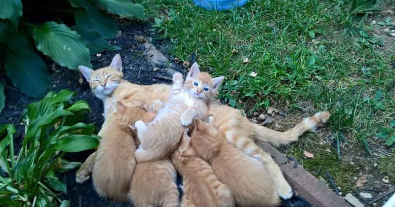 kitten waving The Shirk Report – Volume 386