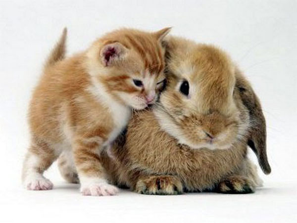 kittens and their matching bunnies 3 Kittens and their Matching Bunnies