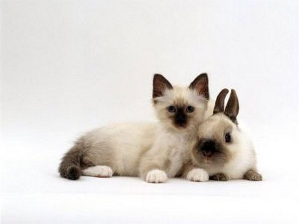 kittens and their matching bunnies 5 Kittens and their Matching Bunnies