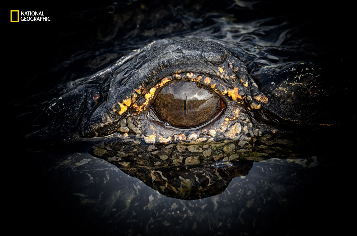 prod yourshot 1186811 8874942 The 2016 National Geographic Nature Photographer of the Year Contest (15 Highlights)