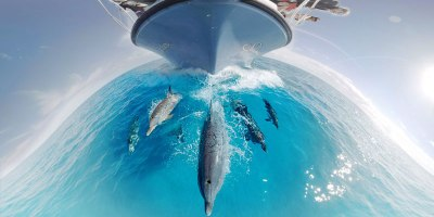 360 Underwater Video Lets You Swim With Dolphins