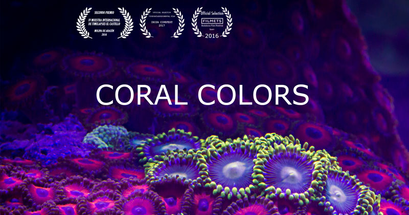 This Coral Timelapse Took One Year and 25,000 Photos toCreate