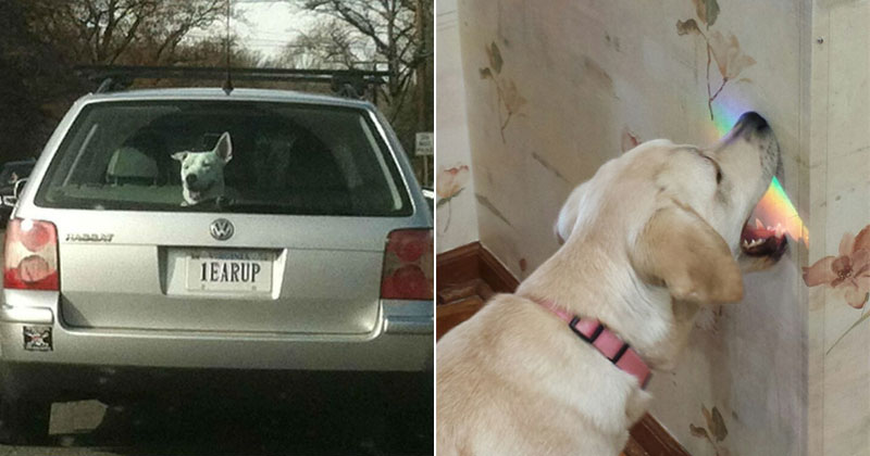 The Shirk Report – Volume 391