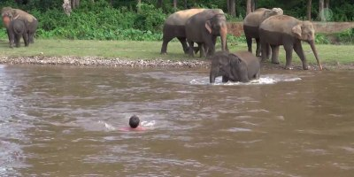 Elephant Rushes Into Water to Save Person She Thinks Is Drowning