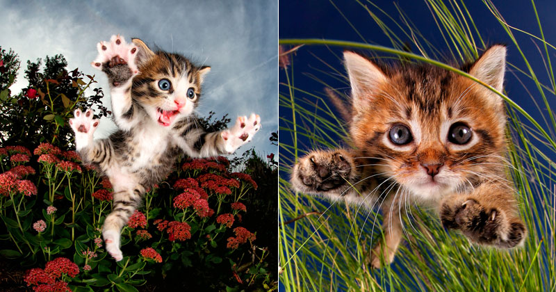 Just a Gallery of KittensMid-Pounce