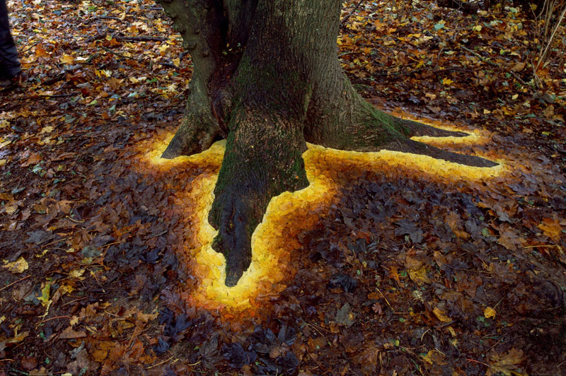 Picture of the Day: Carefully Arranged Leaves Make This Tree Glow