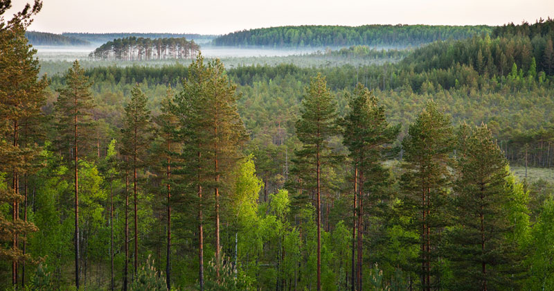 Picture of the Day: Seeing the Forest for theTrees