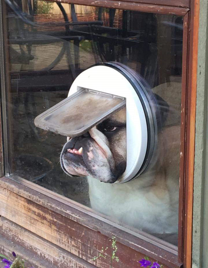 Dog Looking Out Cat Door Twistedsifter