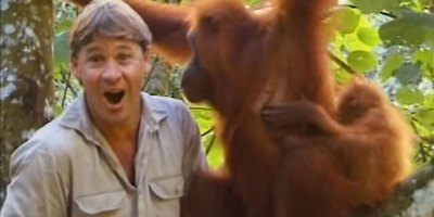 Remembering Steve Irwin's Incredible Encounter with an Orangutan Mom and HerBaby