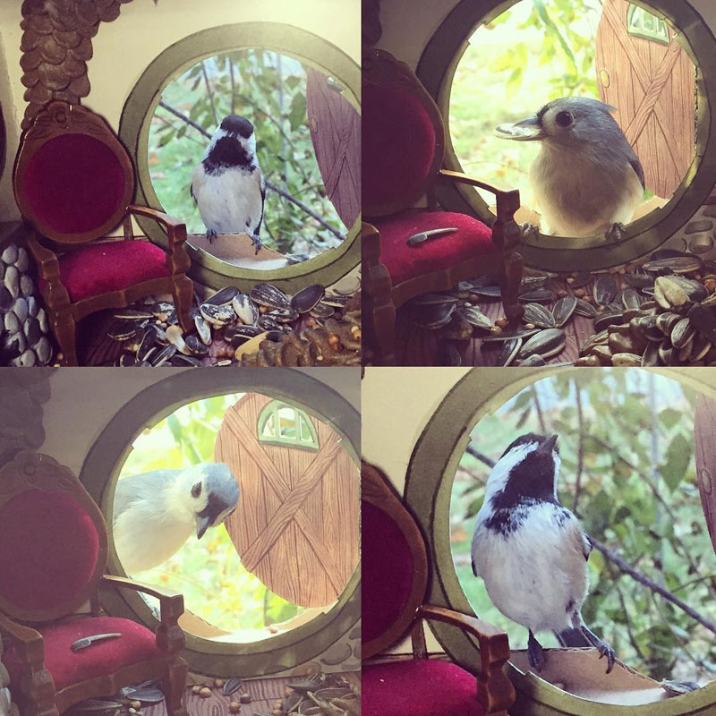tiny homes for birds by jada fitch 1 This Woman Makes Tiny Homes for Her Wild Bird Friends