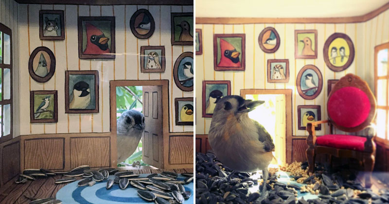 This Woman Makes Tiny Homes for Her Wild Bird Friends