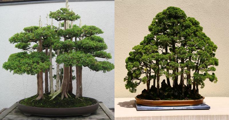 15 Beautiful BonsaiForests