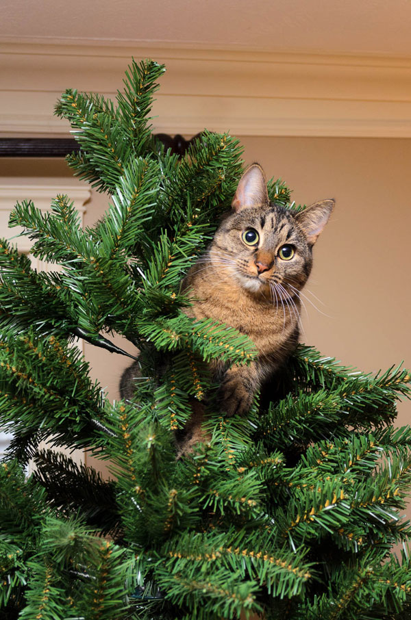 cats that cant believe its christmas 2 Cats That Cant Believe Its Christmas