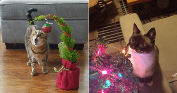cats-that-cant-believe-its-christmas-3
