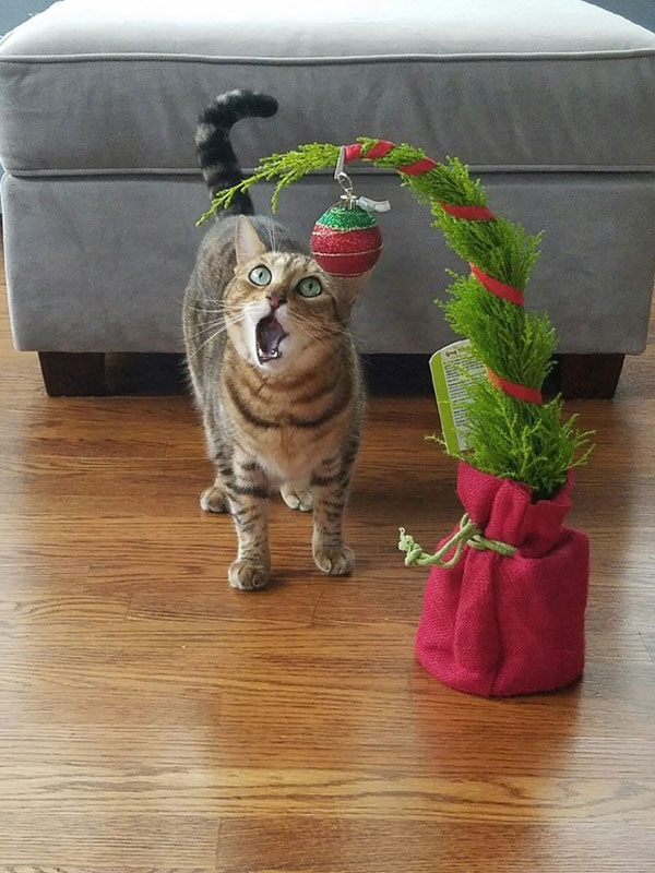 cats that cant believe its christmas 4 Cats That Cant Believe Its Christmas