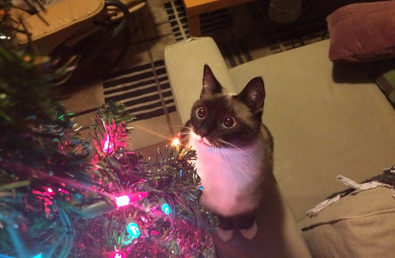 cats that cant believe its christmas 5 Cats That Cant Believe Its Christmas