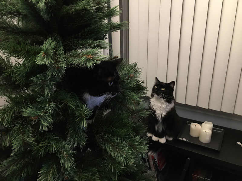cats that cant believe its christmas 6 Cats That Cant Believe Its Christmas