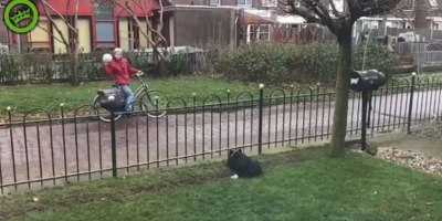 Clever Dog Finds Simple Way to Play Fetch All Day