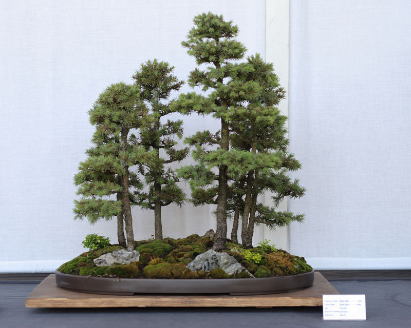 miniature bonsai forests 1 15 Beautiful Bonsai Forests