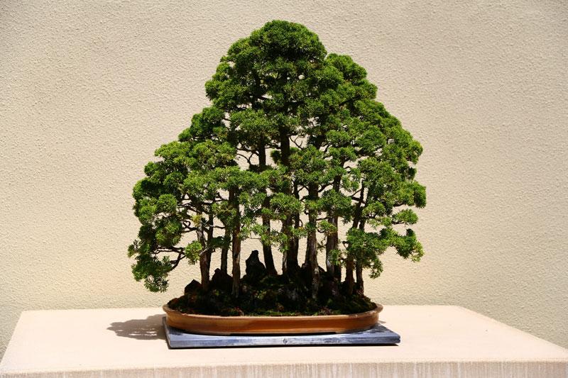 miniature bonsai forests 10 15 Beautiful Bonsai Forests