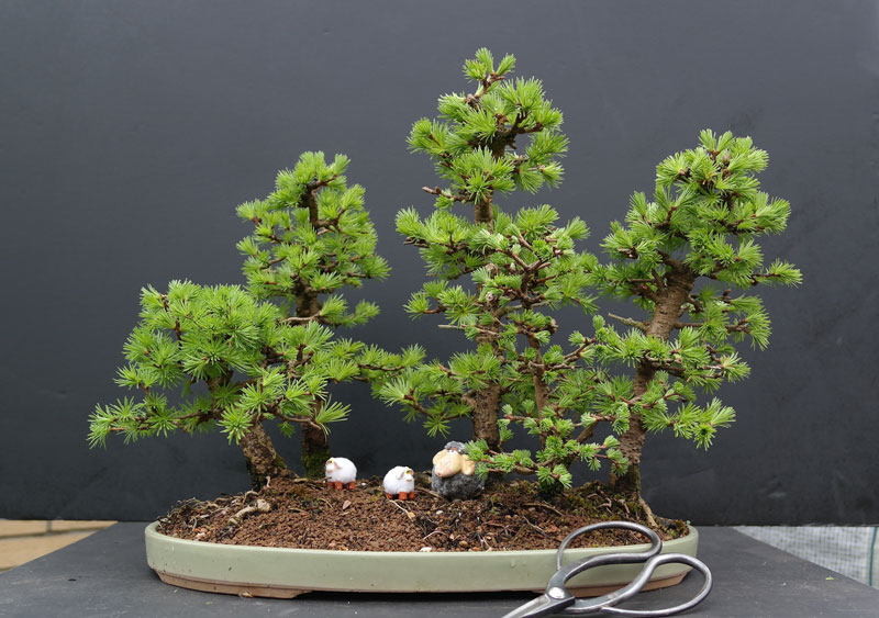 miniature bonsai forests 11 15 Beautiful Bonsai Forests