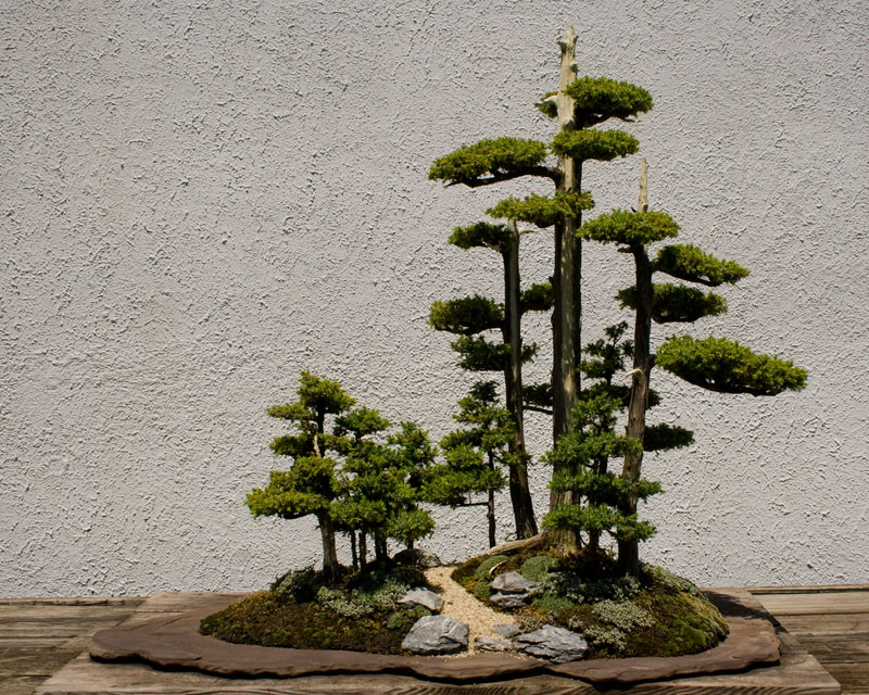 miniature bonsai forests 15 15 Beautiful Bonsai Forests
