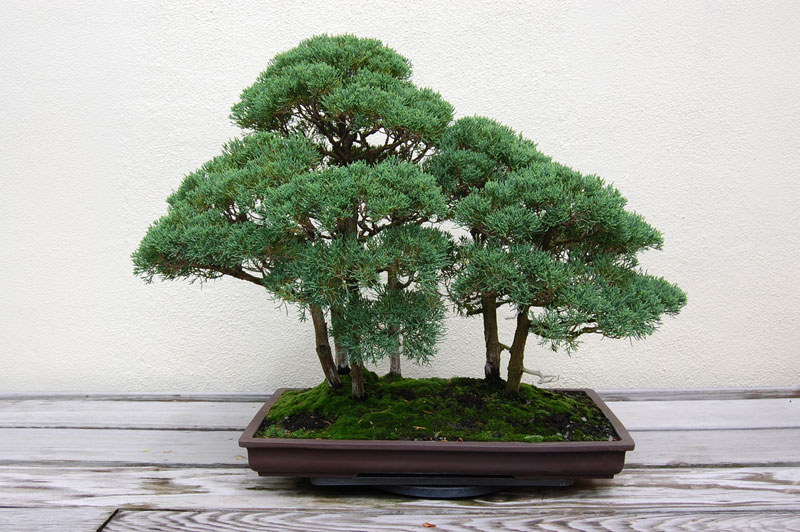 miniature bonsai forests 2 15 Beautiful Bonsai Forests