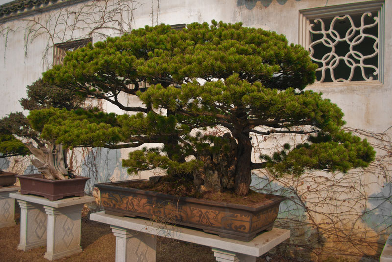 miniature bonsai forests 4 15 Beautiful Bonsai Forests
