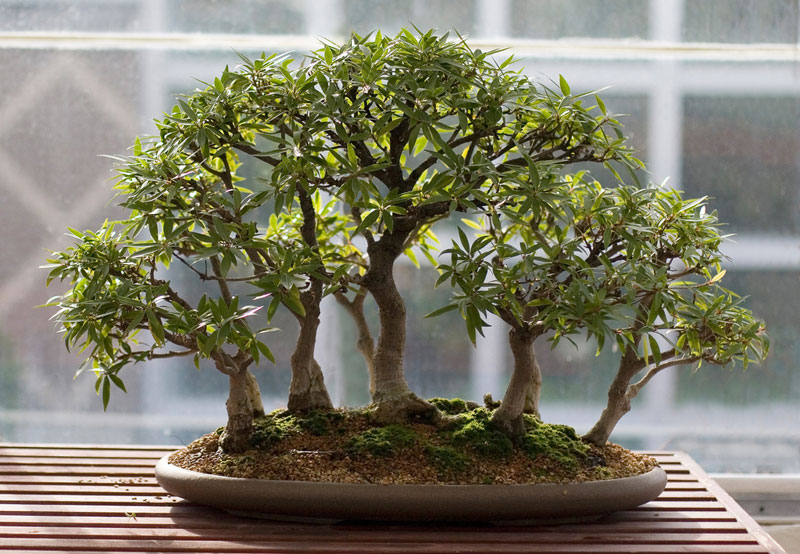 miniature bonsai forests 5 15 Beautiful Bonsai Forests