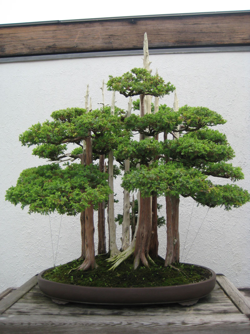 miniature bonsai forests 6 15 Beautiful Bonsai Forests