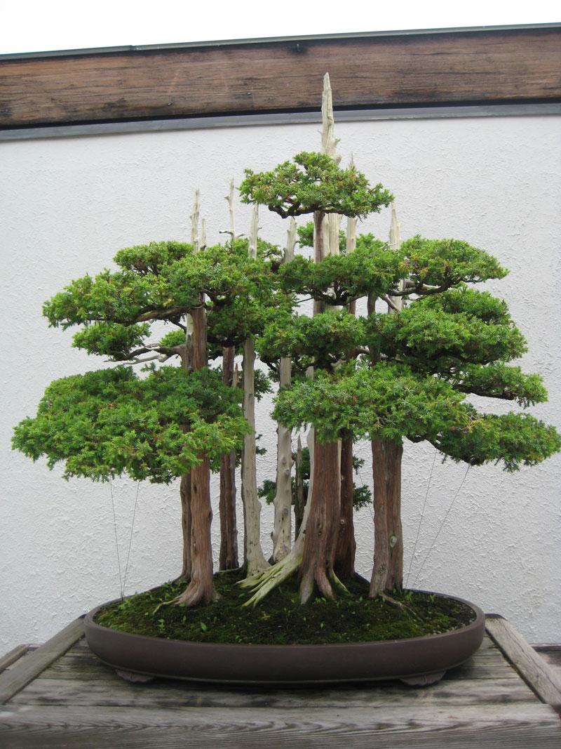 miniature bonsai forests 6 15 Beautiful Bonsai Forests