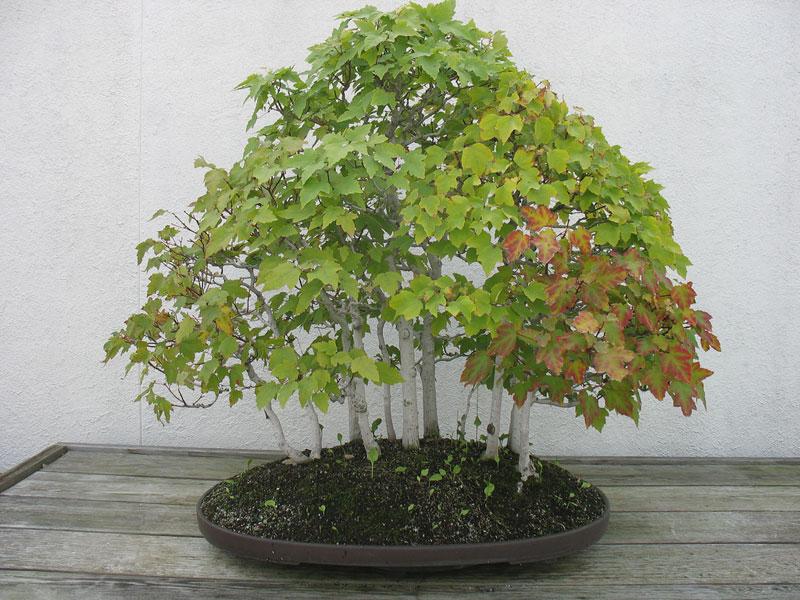 miniature bonsai forests 7 15 Beautiful Bonsai Forests