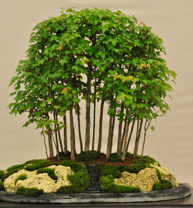 miniature bonsai forests 8 15 Beautiful Bonsai Forests