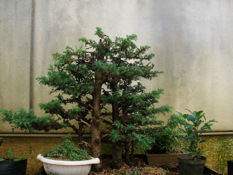 miniature bonsai forests 9 15 Beautiful Bonsai Forests