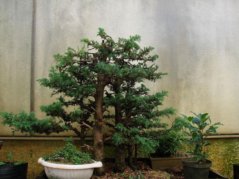 miniature bonsai forests 9 15 Beautiful Bonsai Forests