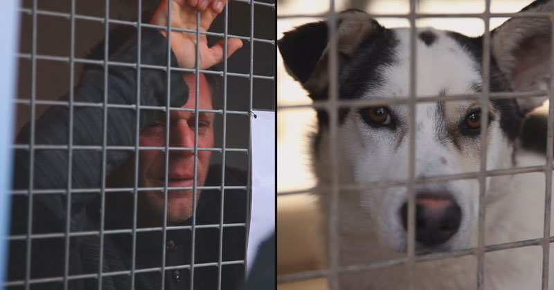 remi-gaillard-locks-himself-in-cage-for-87-hours-raises-200000-and-gets-200-dogs-adopted