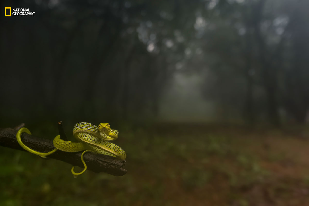 varun aditya ngnp animalportraits1 The Winners of the 2016 National Geographic Nature Photographer of the Year Contest