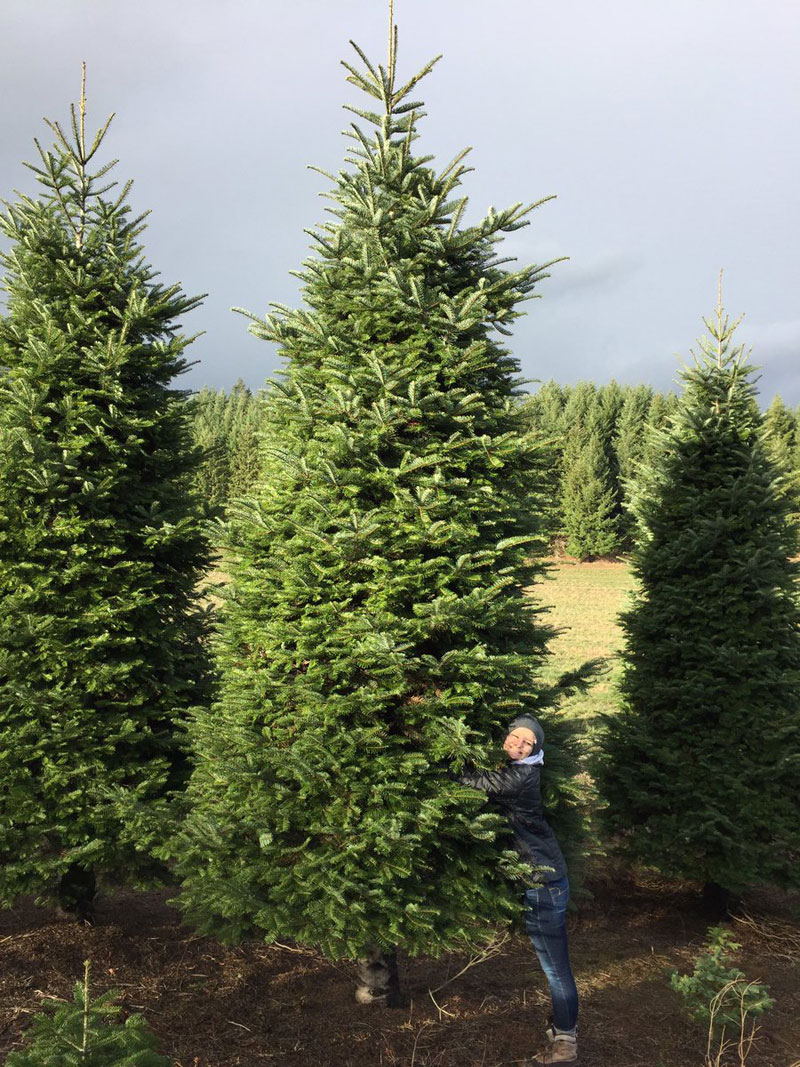 we bought a 20 ft christmas tree and cut it in half so it goes through - Half Christmas Tree