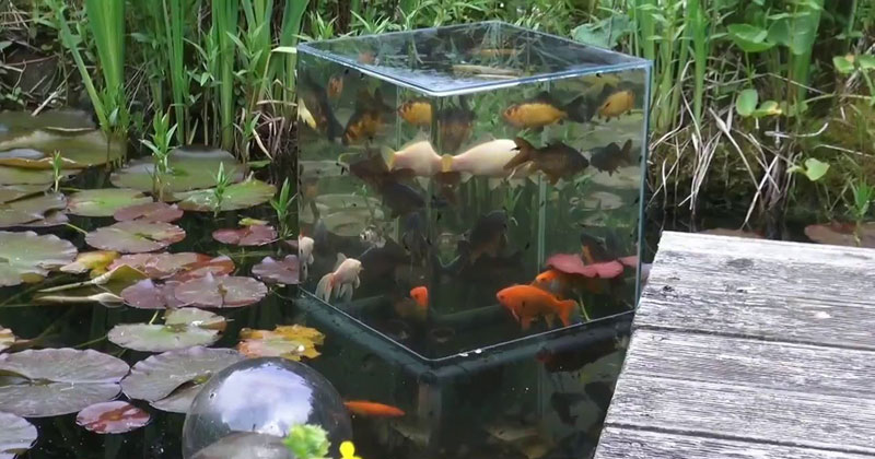 DIY Fish Tower and Silky SmoothJazz