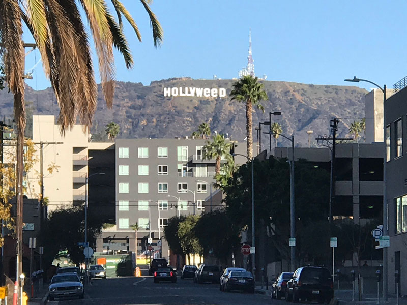 hollyweed-signtwistedsifterhollyweed-signhollyweed-sign-close-uppicture of the day buttontwistedsifter-on-facebook