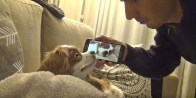 Just a Snoring Dog Being Awakened by a Video of Him Snoring