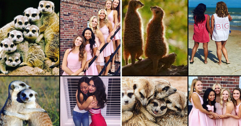 Someone Noticed Sorority Sisters Pose Like Meerkats and There are Photos to ProveIt