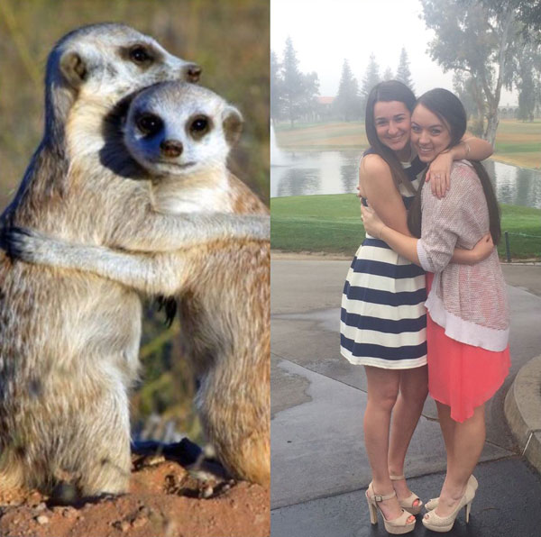 sorority sisters posing like meerkats 10 Someone Noticed Sorority Sisters Pose Like Meerkats and There are Photos to Prove It