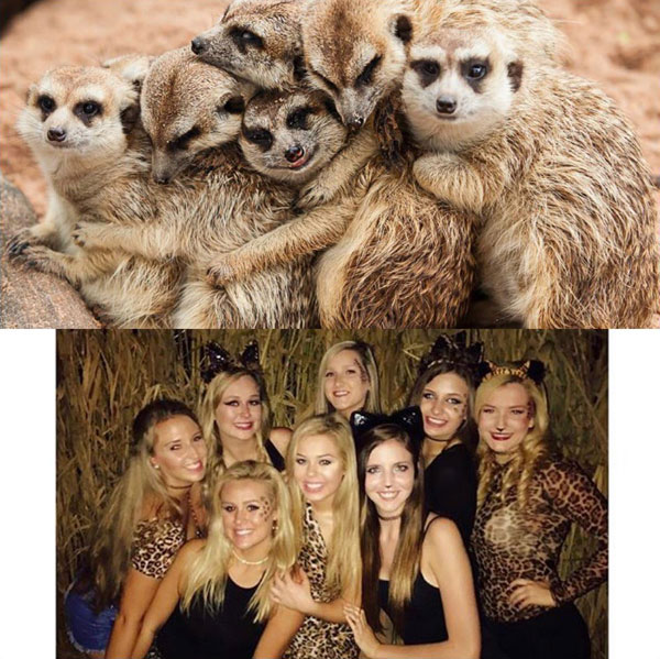 sorority sisters posing like meerkats 3 Someone Noticed Sorority Sisters Pose Like Meerkats and There are Photos to Prove It