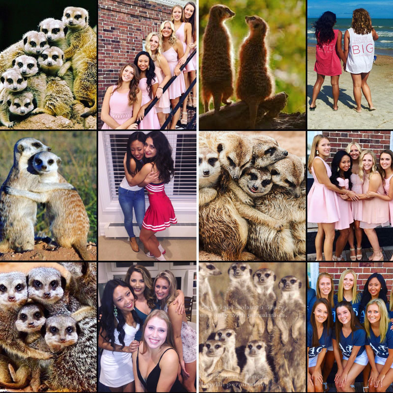 sorority sisters posing like meerkats 5 Someone Noticed Sorority Sisters Pose Like Meerkats and There are Photos to Prove It