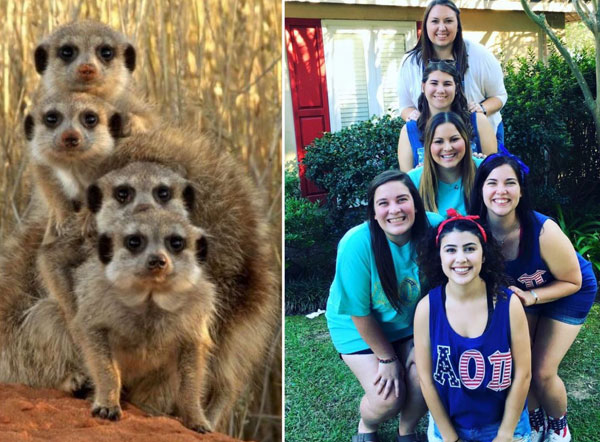 sorority sisters posing like meerkats 9 Someone Noticed Sorority Sisters Pose Like Meerkats and There are Photos to Prove It